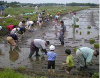 米作り体験(田植え)